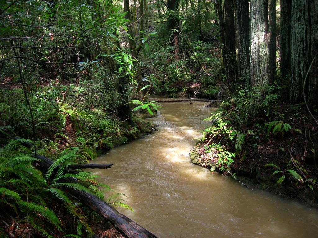 The water rushes downstream
