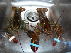 Lobster dish - 1