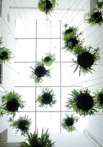 Jard n vertical tillandsias a reas for Jardin vertical colgante