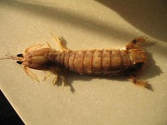 Dongbei Seabug
