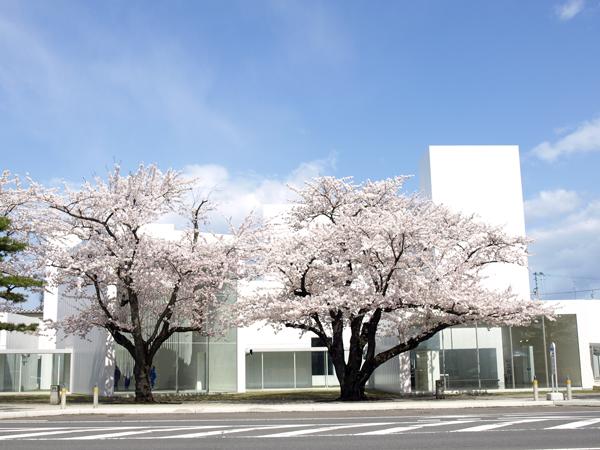 十和田市現代美術館 1