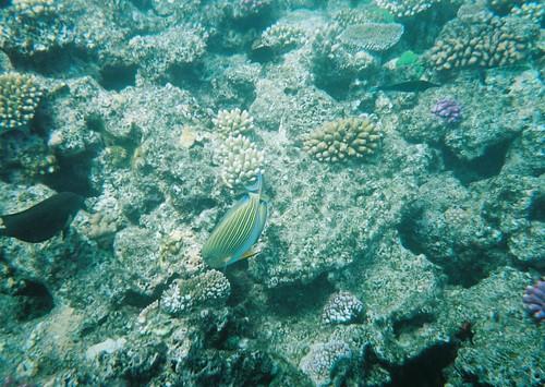 A tu per tu con coralli e pesci variopinti
