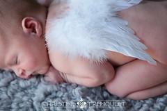 Charlotte's Newborn Session