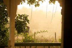 Afternoon sun shower
