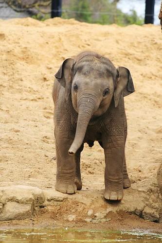 Dublin Zoo cuteness