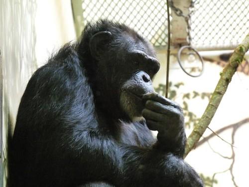 Kindergarten Zoo Trip 083