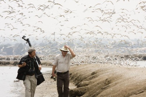 Port of San Diego Bird Survey