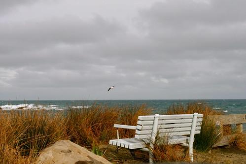 Sunday: Island Bay