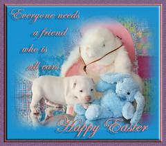 White Puppy Dog Kahuna Luna & Bunny Friends wi...