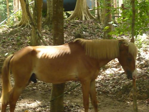 Ngựa đóng phim ốm trơ xương nhìn thấy mà thương