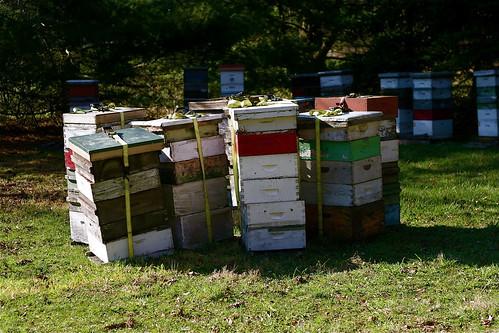 Ohio Honey Farms