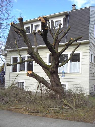 Pruning horror II