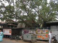 Uthara Guruvayoorappan 2