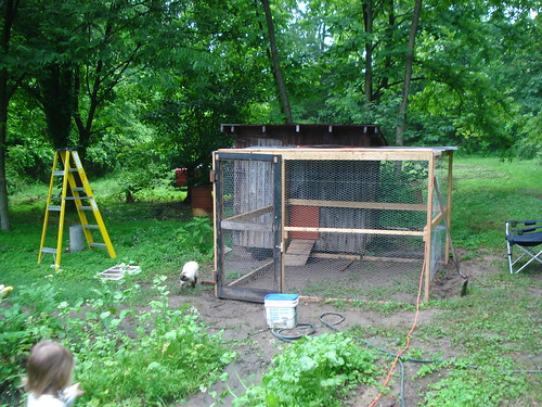 the coop and chicken run