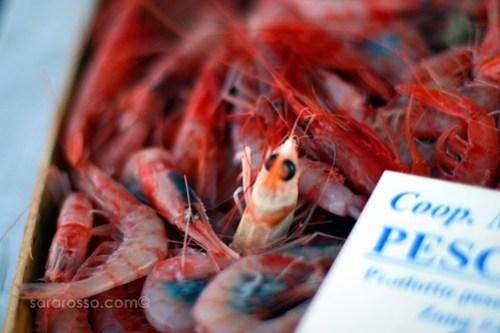 Shrimp escaping from Favignana Island, Sicily, Italy