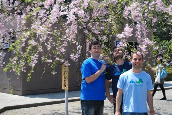 Neki, Pau e Ikusuki bajo el sakura