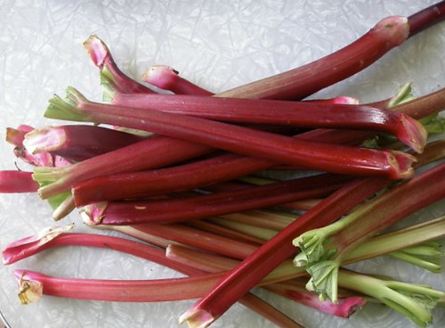 Rhubarb, straight from the garden