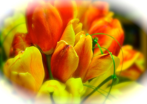Mother's Day Tulips by Shirley Buxton