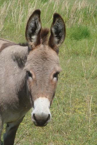 Donkey Friend