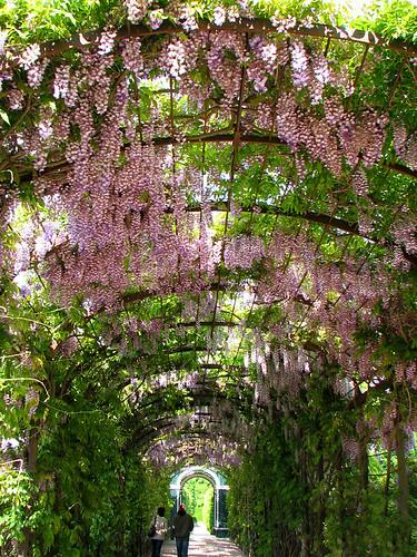 Schonbrunn Palace garden by you.