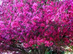 Springtime, Milford