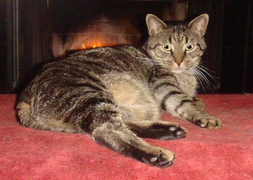 Kosmo enjoys the fireplace