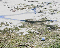 Golf Ball Lands Near Snow