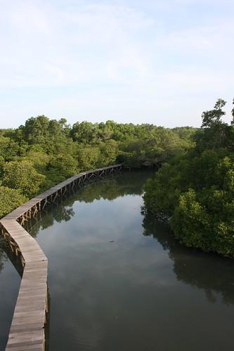 Mangrovenwald in Südbali