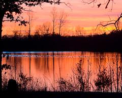 Lake and ducks at sunset