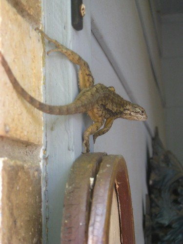 Lizard on the Wall