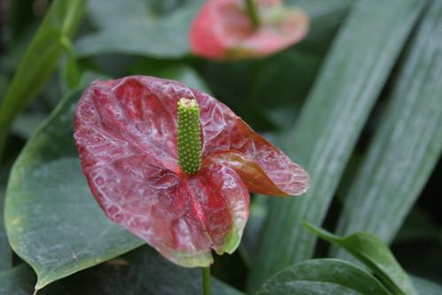 Unindentified Exotic Plant