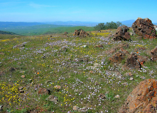 Wildflowers on Rocky Ridge