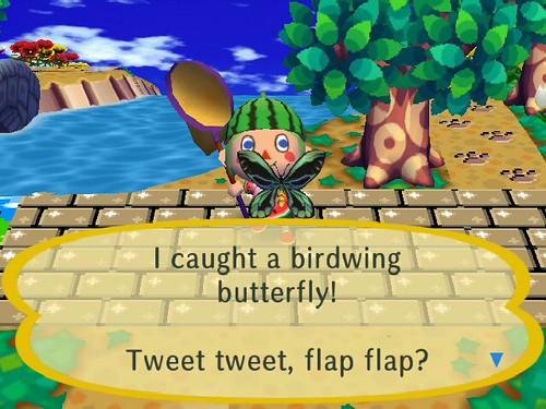 I finally caught the monstrous Birdwing!