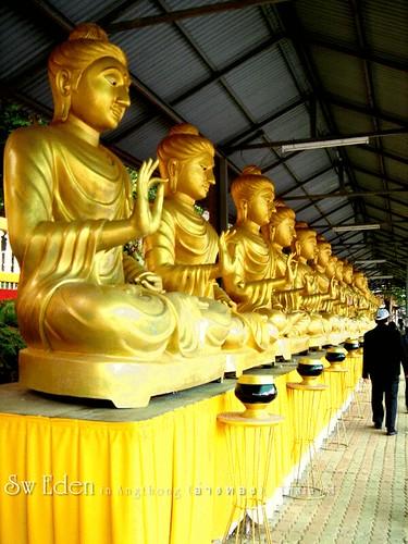 Gold big Buddhas