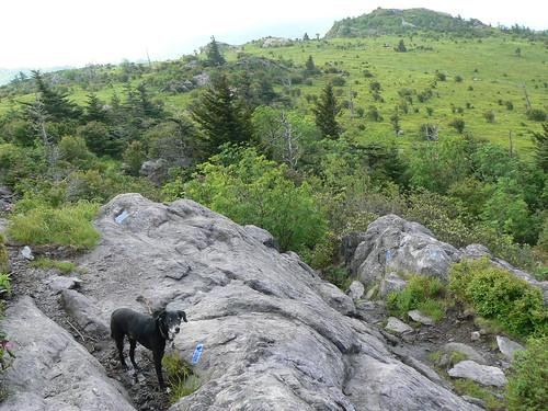 Mount Rogers Backpacking 2009 - Wilburn Ridge Trail - Jimmie on Wilburn Ridge