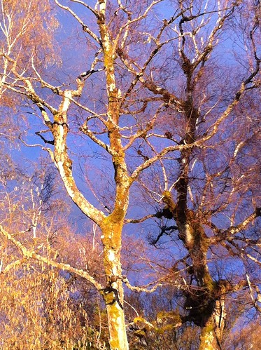 afternoon trees2