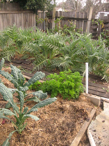 Veggie garden at the Winter Solstice