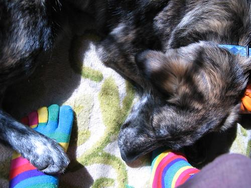 Pekoe napping by my toe-socked feet