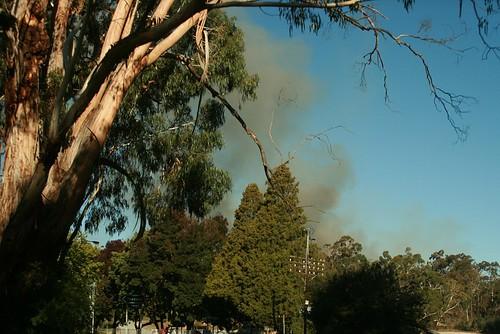 Bridgewater Fire, Smoke thru Trees
