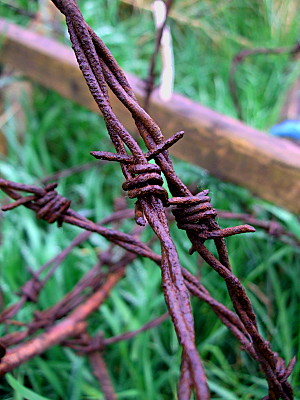 Rusty barbed wire, taken this afternoon, after a rainshower.