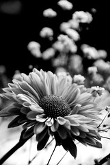 Flores de mamá