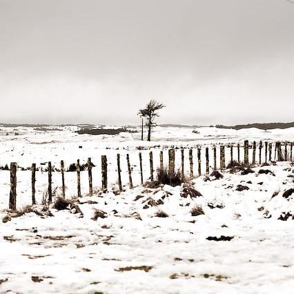 Mountain / Tree por â–ºCubaGallery