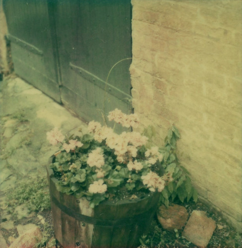 Geraniums on 2nd Street - Polaroid Week (by jesshibb)