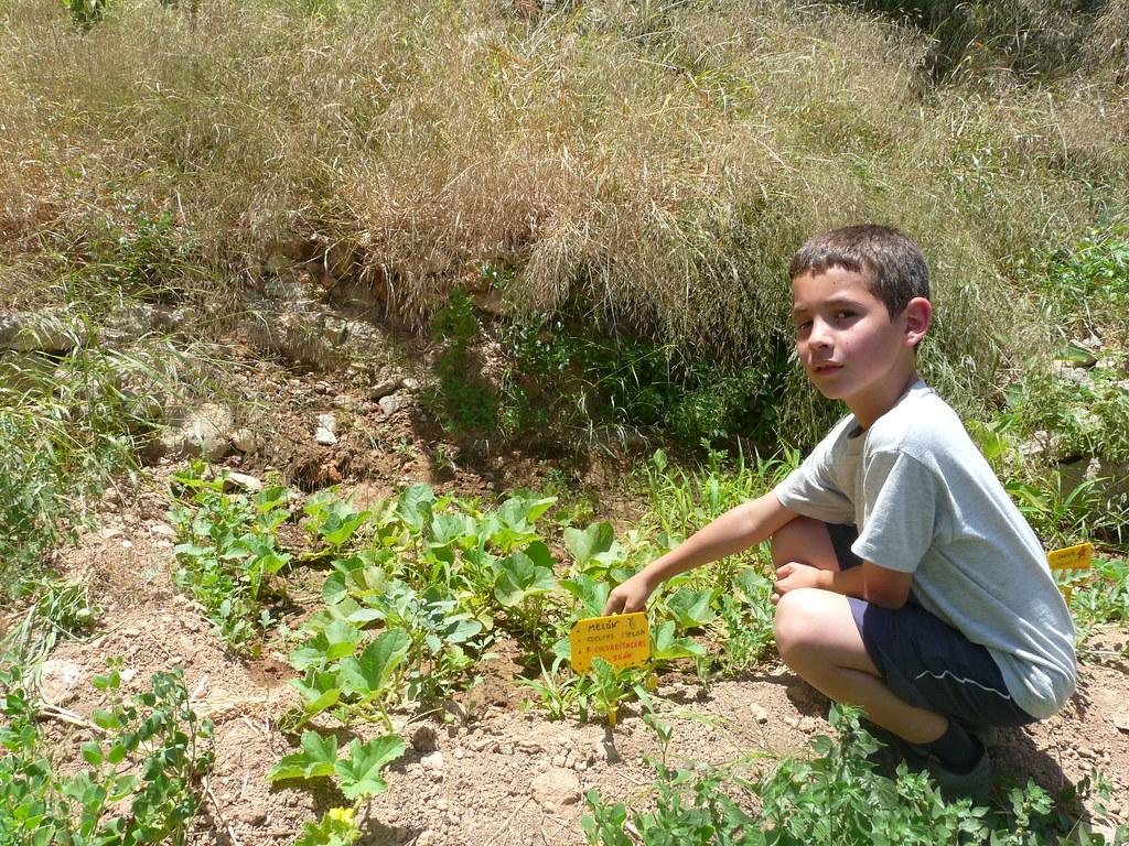 LAS FLORES DE ESTAS PLANTAS SE TRANSFORMARÁN EN MELONES Y SANDÍAS
