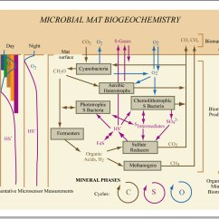 Complicated Water Cycle Diagram 98 Civic Ex Fuse Aerobic Denitrifying Bacteria Reef Central Online Community