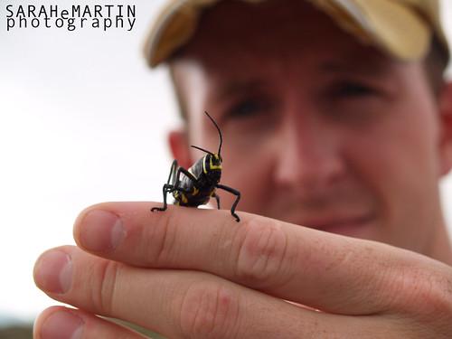 Zack and a Grasshopper