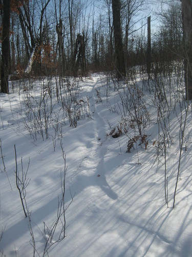 Beaver tracks. They drag their tails. In deep snow they hop.