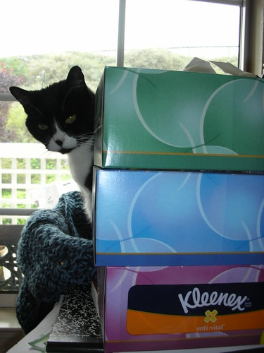 What are you hiding behind the great well of Kleenex?