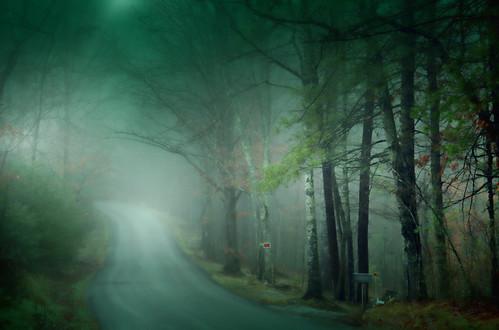 Thru the Misty Wood