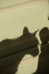 Kurt Shadow 3